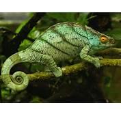 Reptiles  07 1600x1200 11664 HD Wallpaper Res DesktopAS