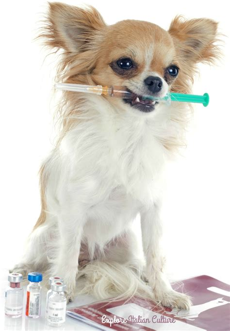 how much are rabies for dogs the canine rabies vaccine