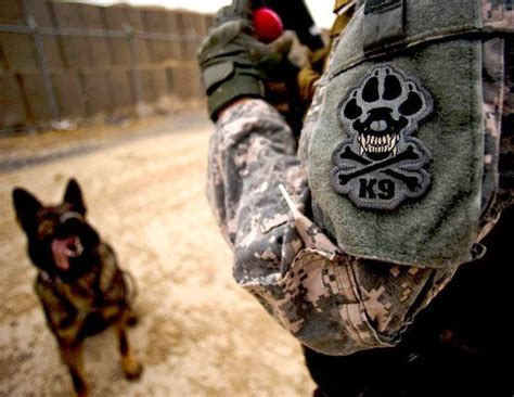 k9 tattoo navy seal dogs picture adoptions soar after