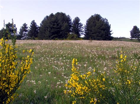 prati in fiore parco nazionale della sila galleria fotografica prati in