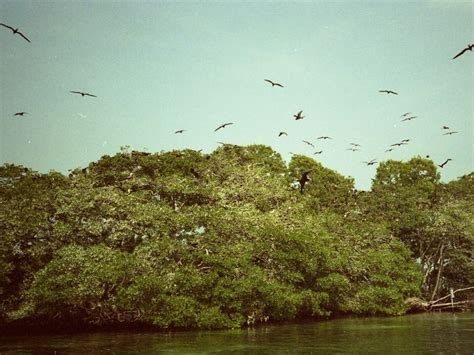 bird island belize pin by tommy haynes on belize quot home sweet home quot pinterest