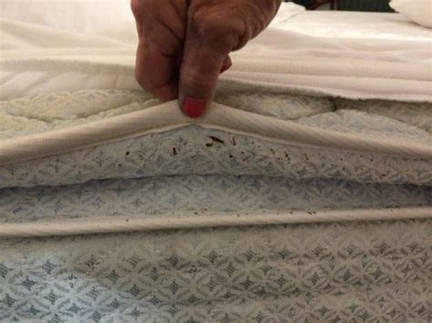 signs of bed bugs on mattress tell tale signs of bed bugs picture of la quinta inn