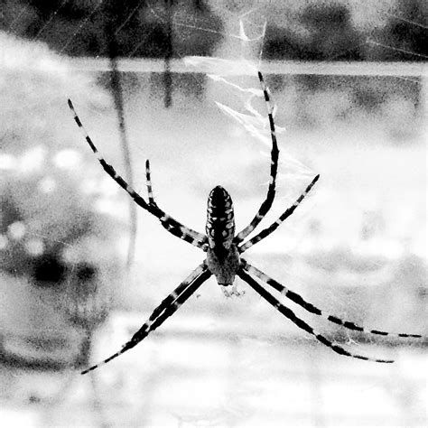 Dreams About Spiders Falling From The Ceiling by Spiders And Ieps Autistic Interpretations