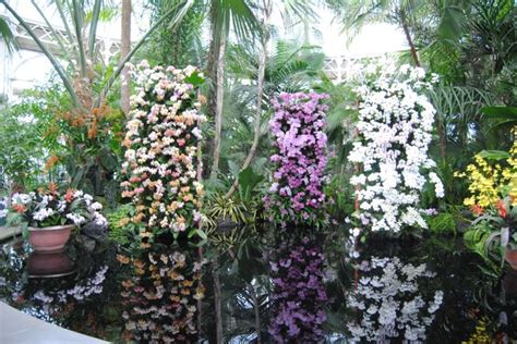 Botanical Garden Orchid Show by New York Botanical Garden Orchid Show Balance Barre Fitness