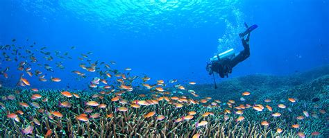 Bali Diving Package bali diving water sports tour