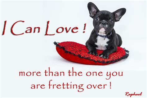 Can You Add More Than One Gift Card On Amazon - i can love you more free love your pet day ecards greeting cards 123 greetings