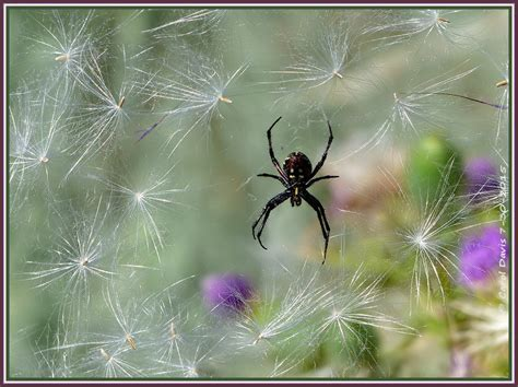 Decor For Homes spider decor how antelope island spiders decorate their