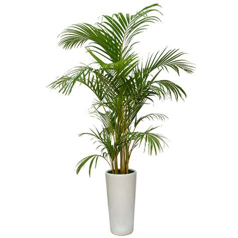 top  nasa air purifying plant jing garden
