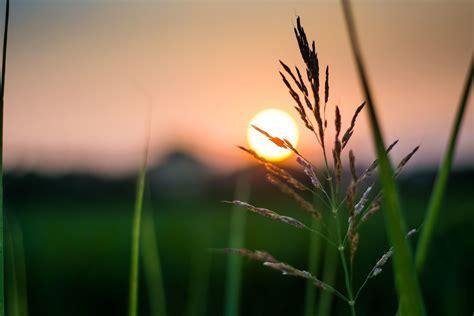 Fondo de Pantalla de Sol, Brillo, Atardecer, Planta, Verde