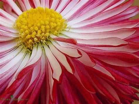 fotos para fondo de pantalla flores fondos de pantallas o wallpapers floresyplantas net