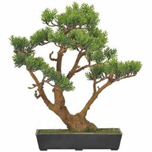 bonsa 239 artificiel cypr 232 s arbre miniature plante d