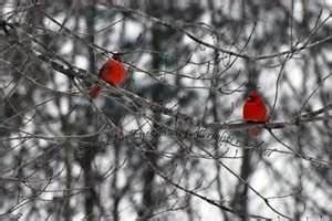 winter photos bing images | butterflies, birds