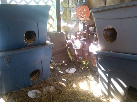 outdoor cat house for winter tips on cleaning the outdoor cat shelters for winter