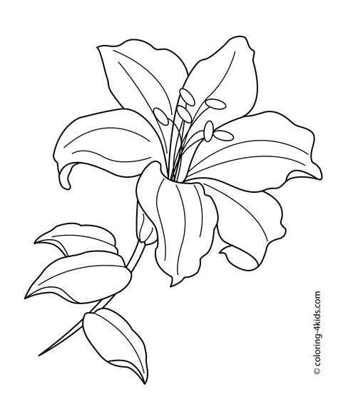 tiger lily coloring page lilium flower coloring pages for kids printable free