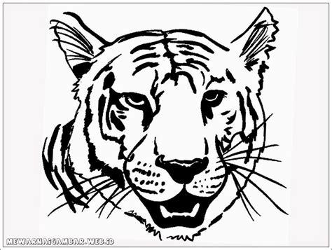 gambar kartun harimau lucu terbaru top gambar