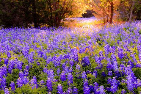 wild  wildflowers alc