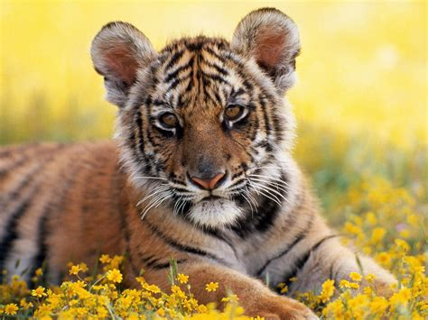wallpaper for desktop of animals hd wallpapers 2012 animal hd wallpapers