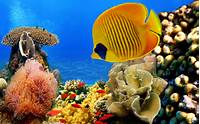 Coral Reef Wallpapers Pictures Photos Images