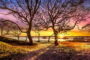 Gold Duvet Cover Oak Trees At Sunrise Photograph By Debra And Dave Vanderlaan