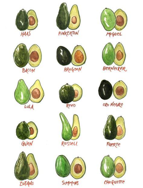 now i my avocados books so many avocados cookbook