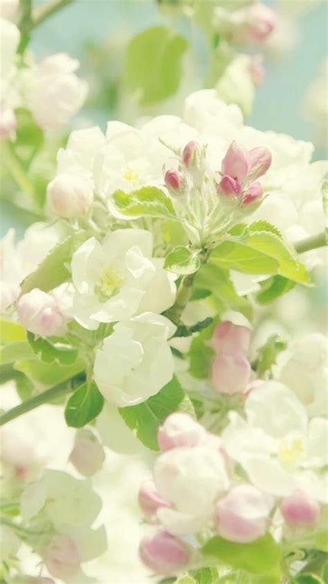 Permalink to Flower Hd Wallpaper.com