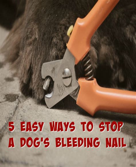 how to stop a s nail from bleeding what to use to stop dogs nails from bleeding nail ftempo