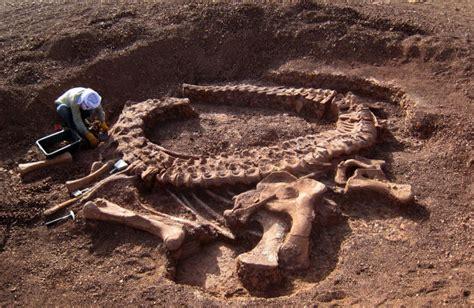 Who Find Dinosaur Bones Can Metal Detectors Be Used To Find Dinosaur Bones