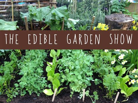 edible backyard plants the edible garden show friendly nettle