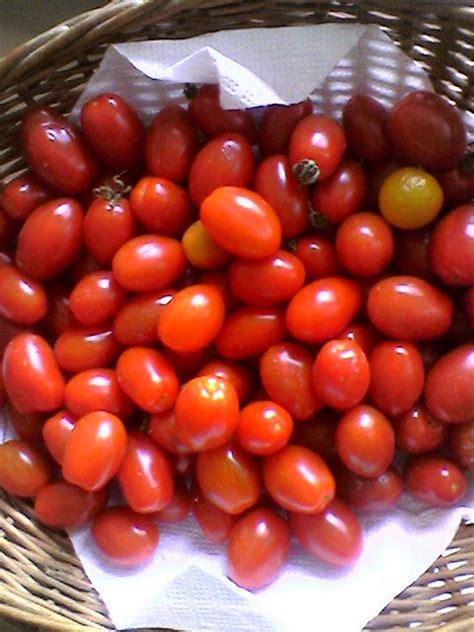 pomodori datterini in vaso kataweb it le mille e una storia 187 archive
