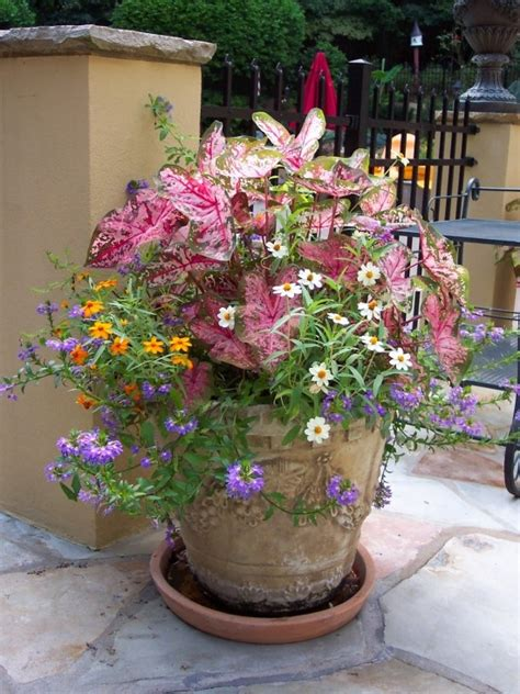 Flower Ideas For Planters by Pin By Dudik On Outdoors