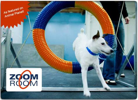 zoom room franchise cost zoom room agility franchise information free info on zoom room agility franchise