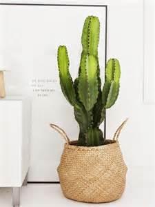 Idee Deco Plante Interieur