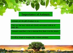 Image result for importance of nature in human life essay