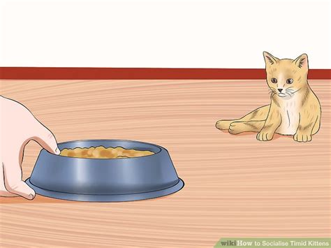 how to a timid to come how to socialise timid kittens with pictures wikihow