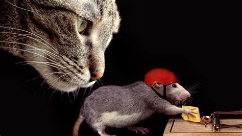 Cat and Rat Cheese Mousetrap Animal Wallpaper #14341