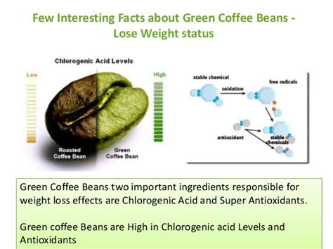 Info Green Coffee few interesting facts about green coffee beans as weight