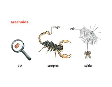species of arachnida and myriopoda scorpions spiders mites ticks and centipedes injurious to classic reprint books arachnid noun definition pictures pronunciation and