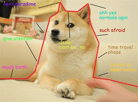 Original Doge Meme - fun business facts 2 dogecoin kaplan business school