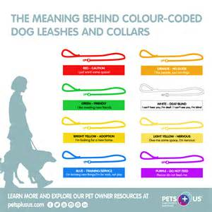 bandana color meaning the meaning colour coded leashes collars