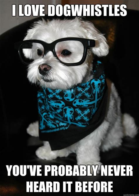 Hipster Dog Meme - hipster dog memes quickmeme