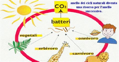 esempio di catena alimentare maredolce la catena alimentare