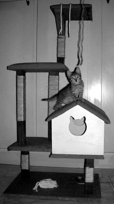 repellente per gatti divano oltre 25 fantastiche idee su mobili per gatto su