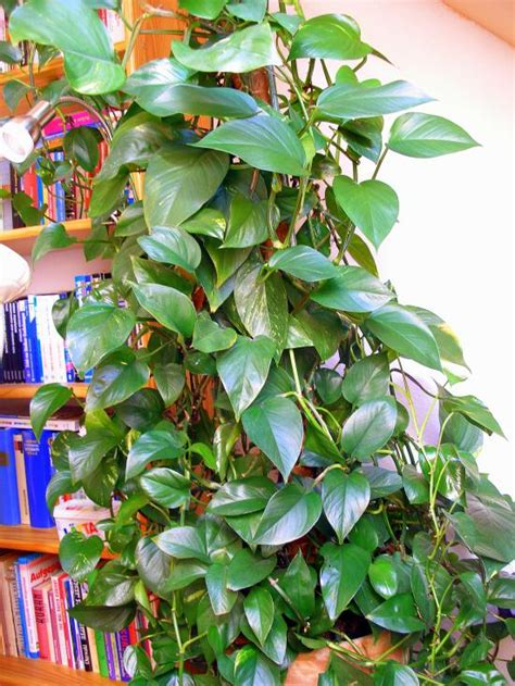 wann muss zurã ckschneiden sch 246 ne pflanzen mit kaffeesatz mineralwasser