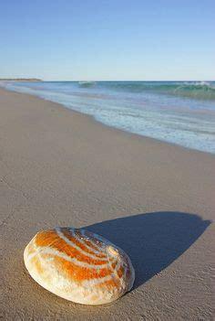 Fantastic Abalone Shell Kerang Laut francesc escuder kapala kengrahami 80 from australia this