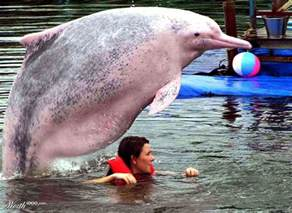 fat dolphin worth1000 contests animal love we share ᵔᴥᵔ pinterest dolphins