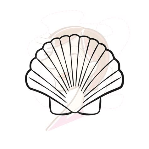Shell Outline by Sea Shell Clipart Cliparts Co
