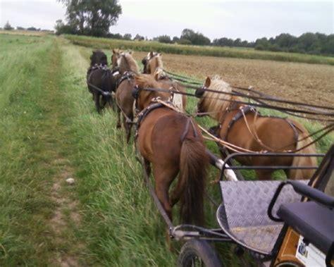 hornhautverkrümmung ab wann korrigieren pferde einfahren