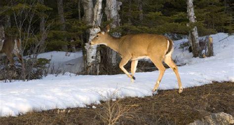 michigan dnr awards 100 000 in deer habitat improvement