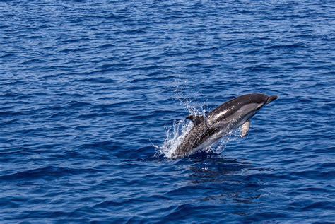 Marine 35gr Makanan Ikan Laut Free free stock photo of animals blue dolphin