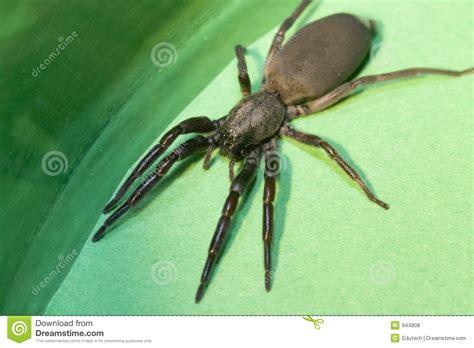 imagenes de arañas blancas ara 241 a de la cola blanca foto de archivo imagen de com 250 n